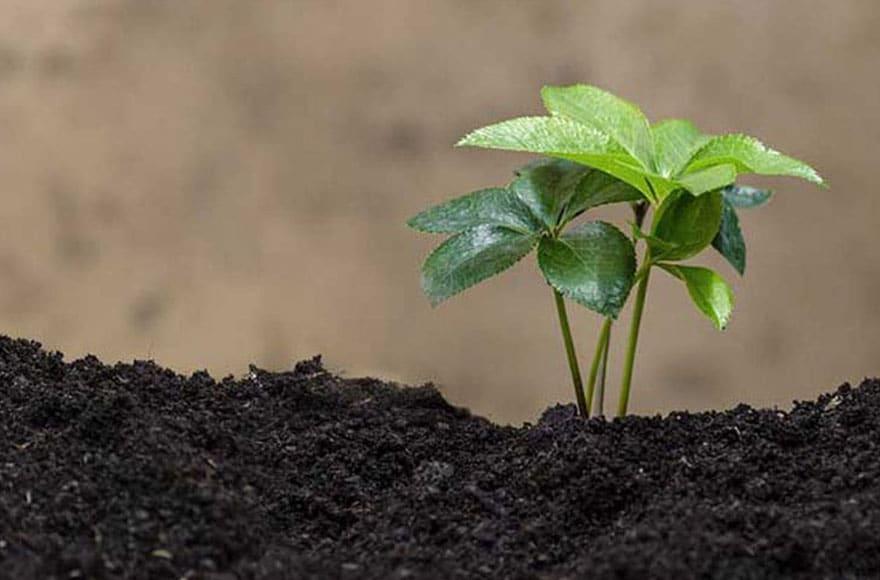 Une jeune pousse verte qui sort de terre